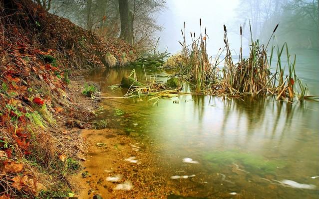 Mgły w Dolinie Brdy Bory Tucholskie Zbyszek1955 #336494