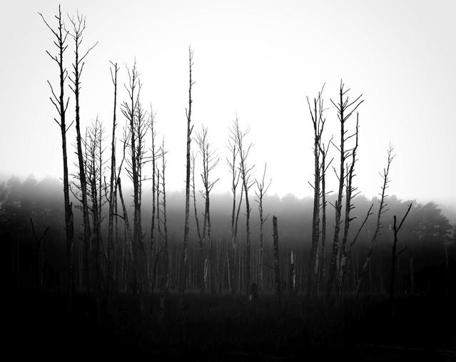 Rezerwat przyrody Kuźnik Krzysztof Tollas #310888