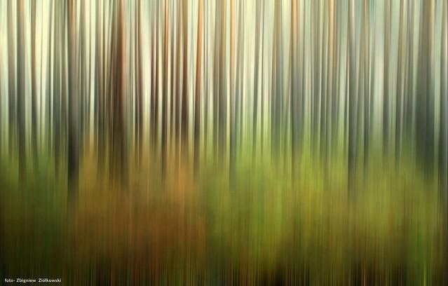 Leśne inspiracje Bory Tucholskie Zbyszek1955 #336607