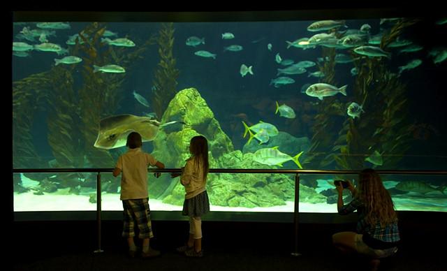 Dzisiaj ( 20 grudnia) Dzień Ryby. Restauratorzy i gospodynie też