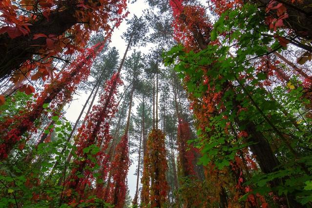 Jesien-Rezerwat przyrody Kuźnik. Krzysztof Tollas #305951