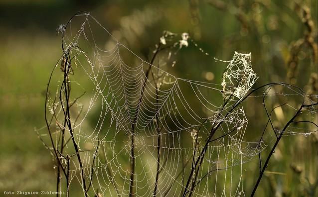 Nić pajęcza Zbyszek1955 #337119