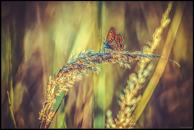 © Żarek w kolorach przyrody. RemoFotografiaRemikNowakowski