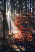 Sławek Rezerwa W jesiennym lesie #1