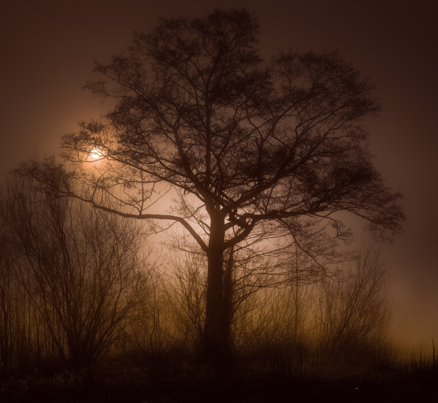 Tree of Life Krzysztof Tollas #323808