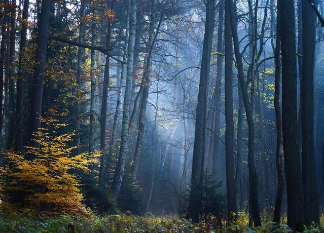 Leśne wojaże Krzysztof Tollas #314120