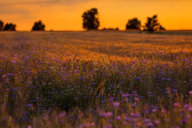 ostatni wieczór gorącej wiosny Jerzy Kowalski #325212