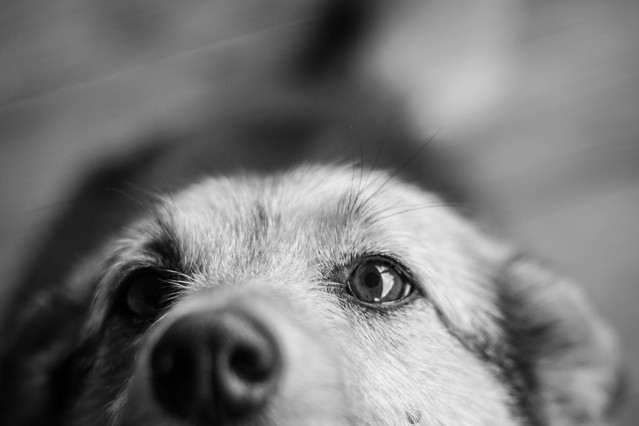 miej serce i patrzaj w serce :) Bogdan - pies po przejściach ,