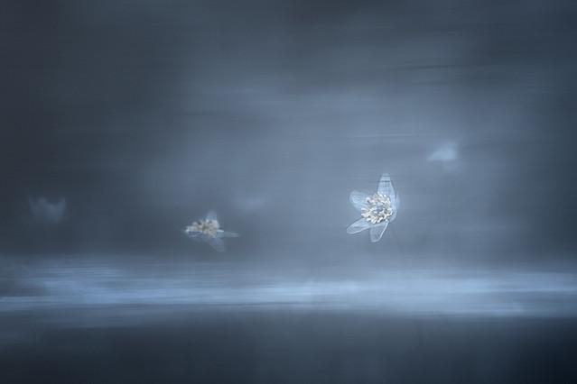 we mgle, w świetle... w wodzie... Przemek Kijowski Fotograwhy