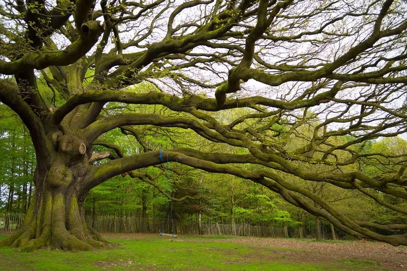 Krzysztof Tollas|Majestatyczne drzewo