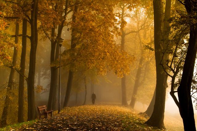 Zapraszam na jesienny spacer...... Aneta Konik #206839
