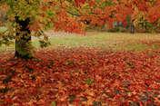 Marcin K ulotne kolory jesieni