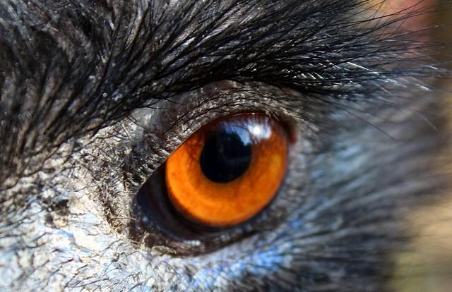 oko w oko 4elza #320747