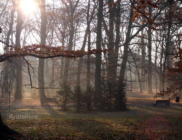 Park Szczytnicki w porannej mgle iwonek #179697