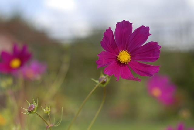 Flower Flower Tomasz Wojnarowicz #108514