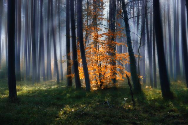 W jesiennym lesie #4 Sławek Rezerwa #326701