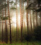 Krzysztof Tollas|Las we mgle