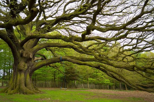 Majestatyczne drzewo Krzysztof Tollas #315896