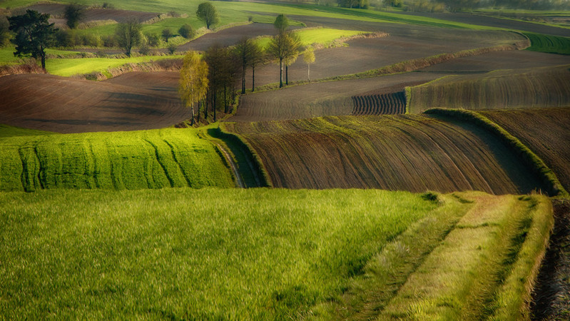 Robert Powroznik|fields...