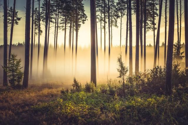 Las w świetle poranka Krzysztof Tollas #321064