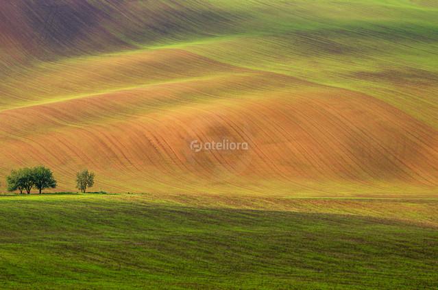 GrzegorzM ...morawskie pola - jesiennie...