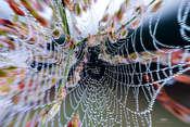 Krzysztof Tollas Spiders' Webs