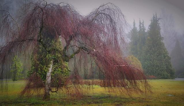 Botanic Park - Łódz -Poland atenytom #335209