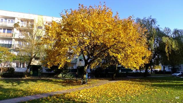 Jesiennie Picasa #300297