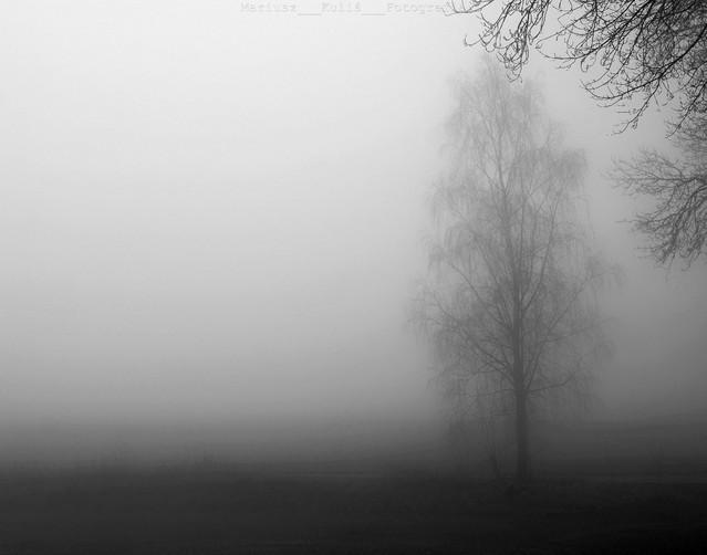 MariuszFotografia #314601