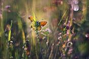 macrofun Kolorowy pejzaż łąkowy :)