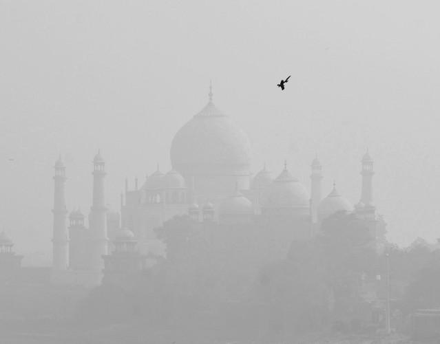 spór o Taj Mahal Stanisław Hawrus #336290