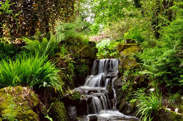 Clyne Gardens, Swansea Zbigniew Kapusta #318157