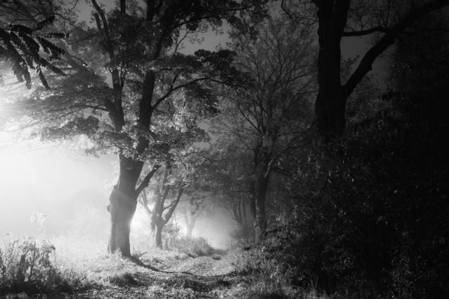 Piła - Dark Alley - B&W Krzysztof Tollas #310889