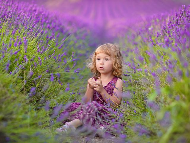 Pawel Prus Lavender Dreams