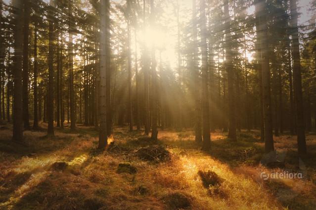 Lasy pod Zieleńcem Zbigniew Kapusta #321979