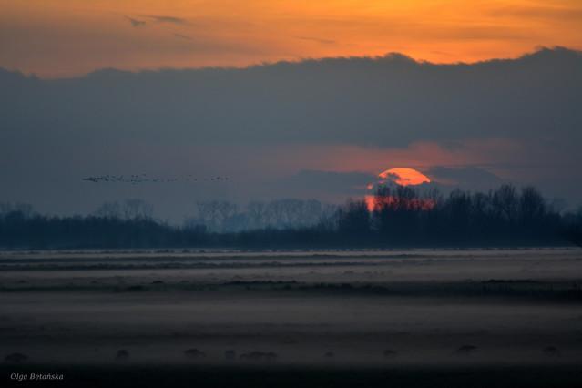 Nadchodzi mgła MalaKsi15 #320745