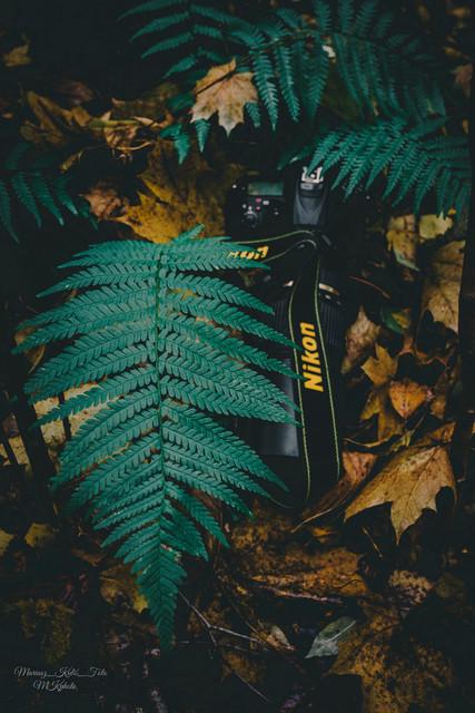 MariuszFotografia photo by Mariusz Kuliś.