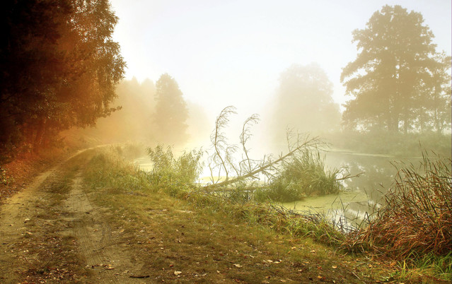 Gdy mgła opadnie.... Dolina Noteci Zbyszek1955 #336566