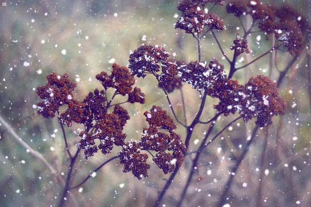 oblicza zimy bozenaewa #305466