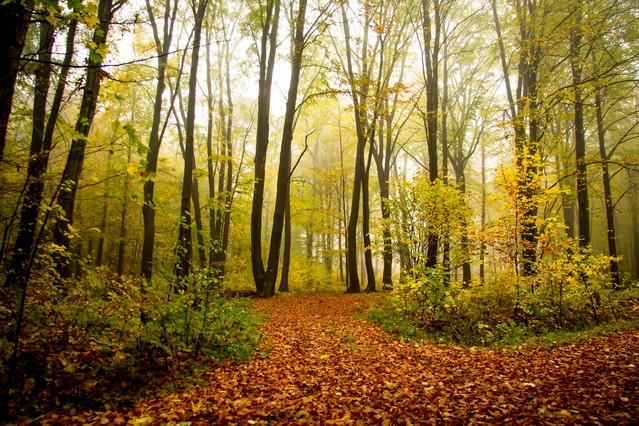 W lesie : Marcin STIEBAL #321198