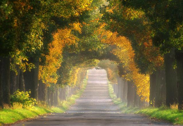 Jesienny tunel. Pawel Bozek #232543