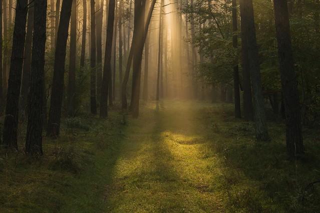 W słońcu i we mgle Kasia Rubiszewska #310765