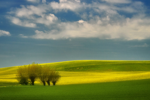 Wiosenne pola okolice Malborka JAN SIEMINSKI #316323