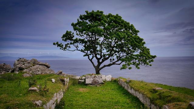 tree of Life atenytom #336849