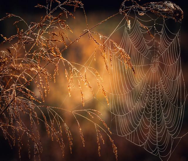 Krzysztof Tollas Cobweb - spider thread