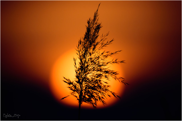 ''Niedziela palmowa'' ;) SylwiaZ #324123