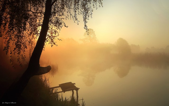 Mgły w Dolinie Noteci Nadnoteckie łęgi Zbyszek1955 #336563